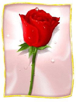 بمناسبة عيد المرأة العالمي 8 مارس Fleur